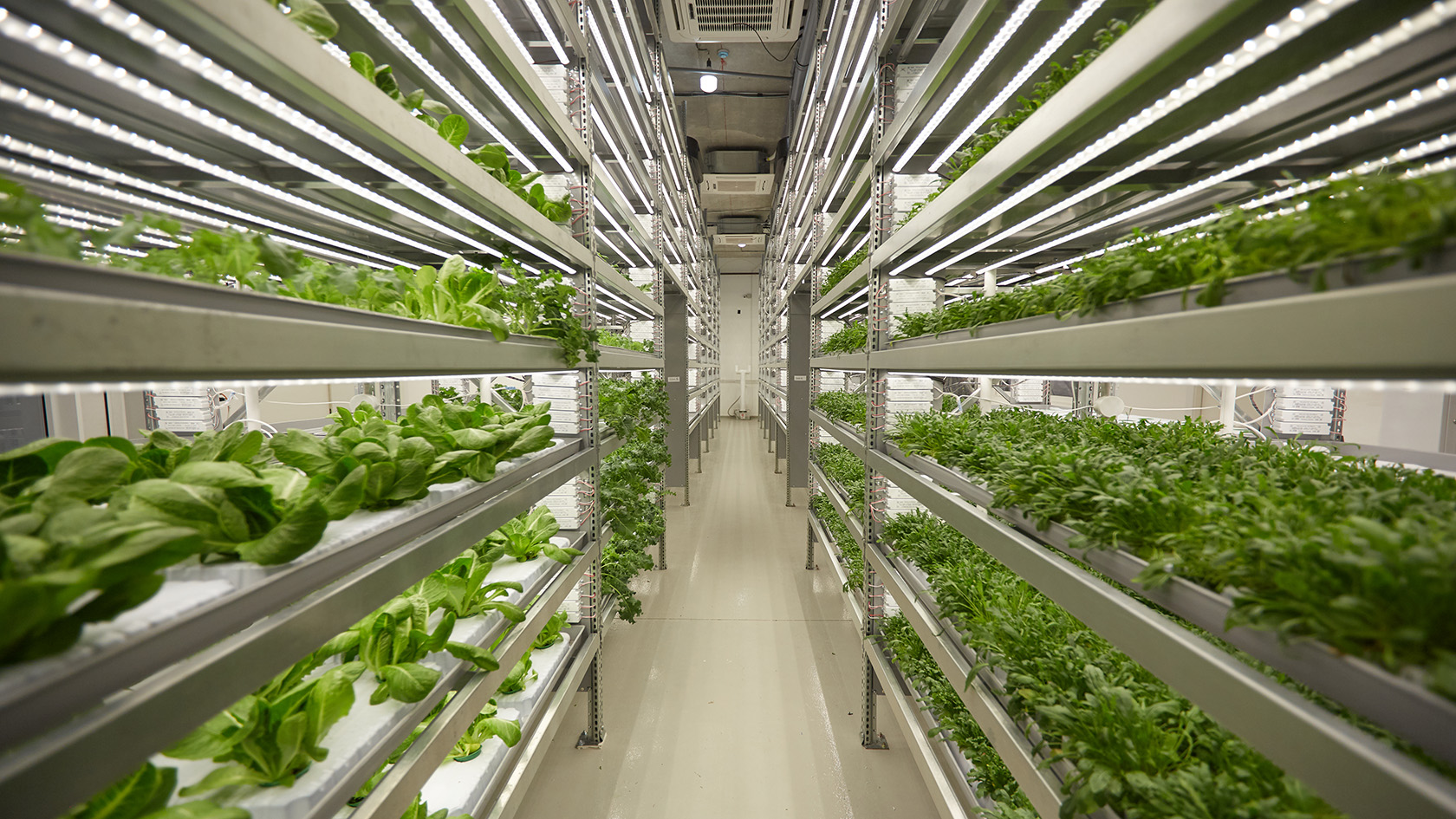 iFarm vertical farms